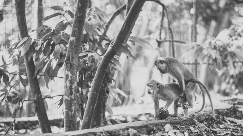 Monkey forest love